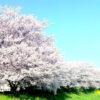 4/2(日)アニバーサリーゲーミング花見 in 大阪城公園♪ゲームバーGeeBee【1周年】